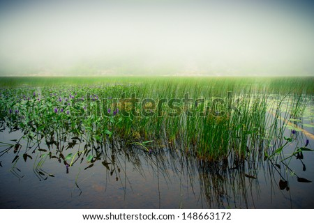 Tall grass over foggy lake at Arcadia National Park in Maine - stock photo