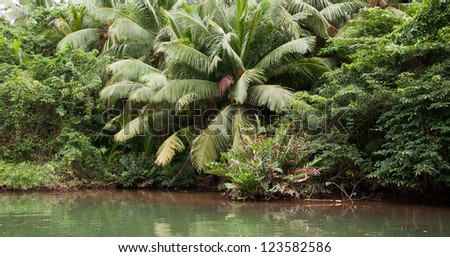 Tall mangrove plants in the rain forest of Dominica - stock photo