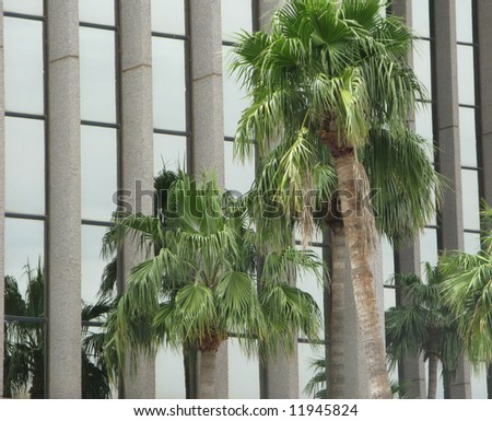 Tall Palm trees against administrative building background