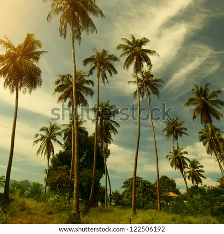 Tall palm trees green grass and cloudy sky - stock photo