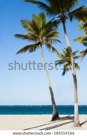 Tall palm trees in a row at tranquil beach