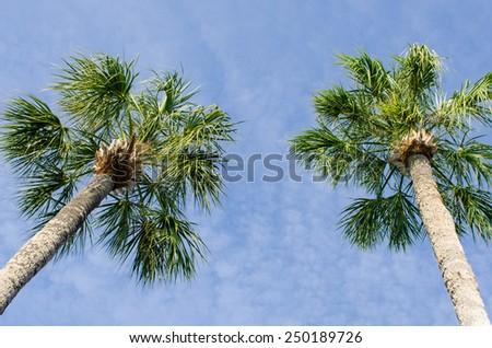 Tall palms - stock photo