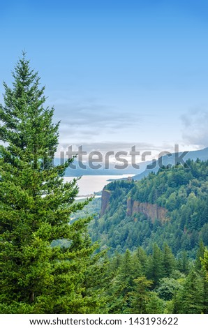 Tall pine tree towering over the Columbia River Gorge in Oregon - stock photo