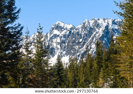 Tall Pines and Range at Mount Rainier National Park - stock photo