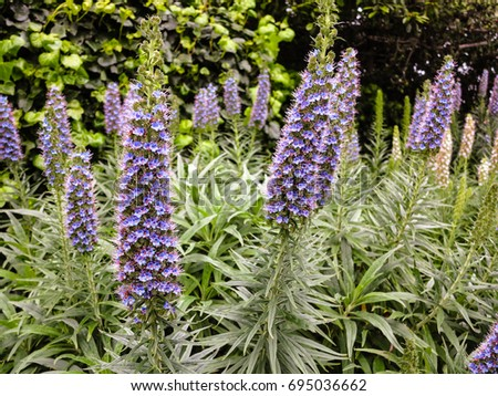 Tall purple perennial flowers stock photo download now 695036662 tall purple perennial flowers mightylinksfo