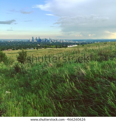 Tall summer grass in field with Calgary downtown in background. Instagram effects.