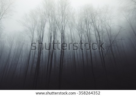 tall trees in fog in forest - stock photo