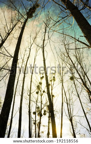 Tall trees without leaves against the winter sky, silhouettes with some detail and textured grungy background - stock photo
