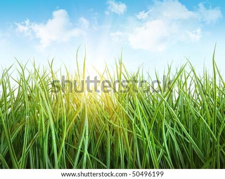 Tall wet grass against a blue sky - stock photo