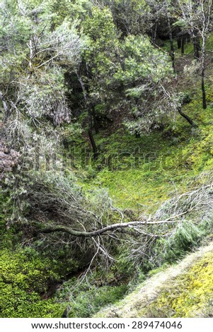 tall willow tree after a stroke of lightning. Forest at Andalusia, Spain - stock photo