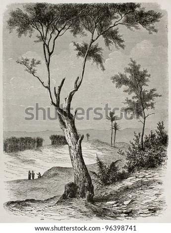 Tamarix old illustration, Babylonia (nowadays Iraq). Created by De Bar after Lejean, published on Le Tour du Monde, Paris, 1867 - stock photo