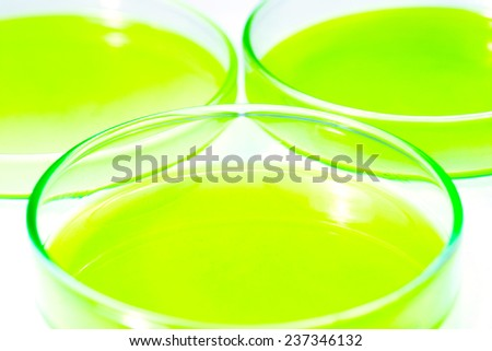 Tampa minimize bacterial cultures. In the laboratory - stock photo