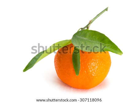 Tangerine Citrus fruits on white background - stock photo