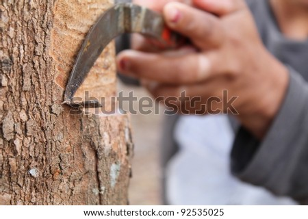 Tapping latex from a rubber tree. Phuket, Thailand - stock photo