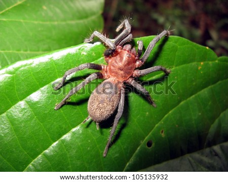 Tarantula (in amazonian rainforesrefers) to several different types of spiders - stock photo