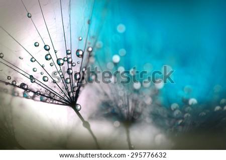 taraxacum in blue - stock photo