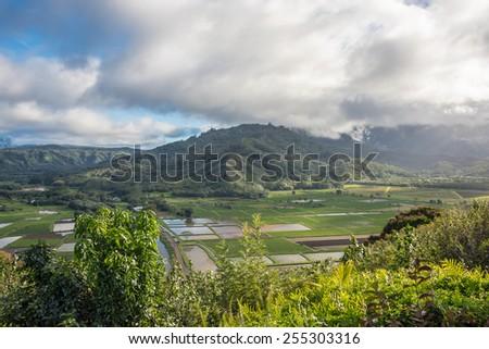 Taro fields in Hanalei Valley on Kauai, Hawaii - stock photo