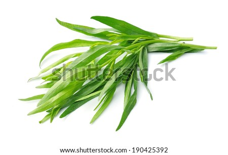 Tarragon herbs close up on white isolated.  - stock photo