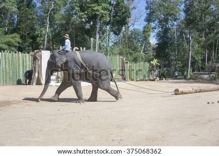 TASIK KENYIR , MALAYSIA - 2015 February 5 : Man guard elephant in elephant Orphanage Sanctuary in, Terengganu, Malaysia. - stock photo