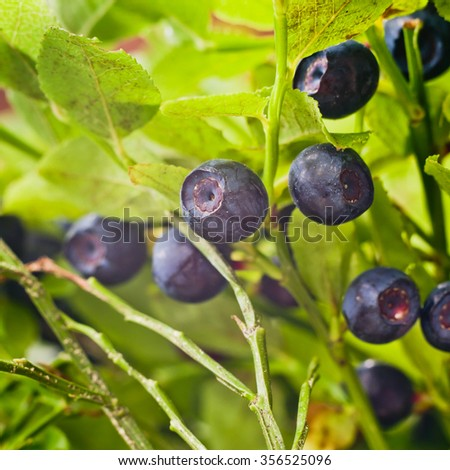 Tasty and healthy blueberries