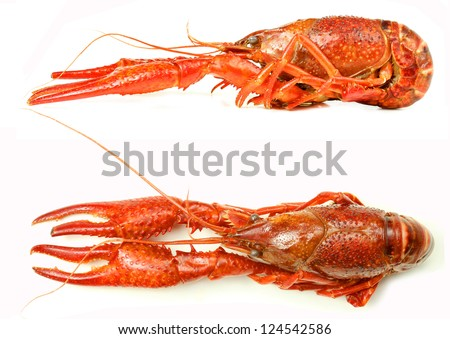 Tasty boiled crayfish, top and side view. - stock photo