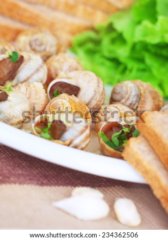 Tasty escargot dish on the plate with bread and garlic, traditional french delicatessen, healthy nutrition, luxury restaurant food - stock photo