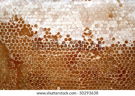 Tasty honeycomb - stock photo