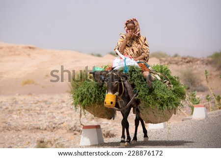 TATA, MOROCCO, AUGUST 30: Old unidentified elderly peasant Moroccan farmer sitting and traveling on her donkey with freshly cut grass and traveling along the road near Tata, Morocco 2014. - stock photo