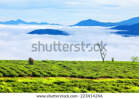 Tea farm and sea of clouds at Da Lat, Vietnam. Da lat is one of the best tourism city in Vietnam. Dalat city is Vietnam's largest vegetable and flowers growing areas. - stock photo