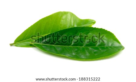 Tea Leaf on white background - stock photo