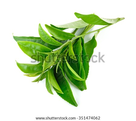 Tea leaves isolated on the white background.