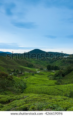 Tea plantation Cameron highlands during sunrise, Malaysia