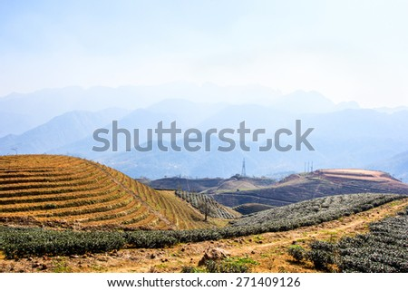 Tea plantation fields, terraced culture, Sapa, Vietnam - stock photo
