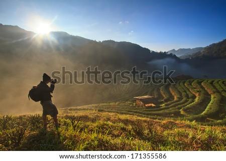 Tea plantation in the Doi Ang Khang, Chiang Mai, Thailand - stock photo