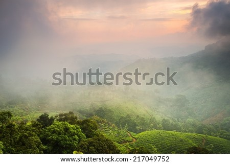 Tea plantations in state Kerala, India - stock photo