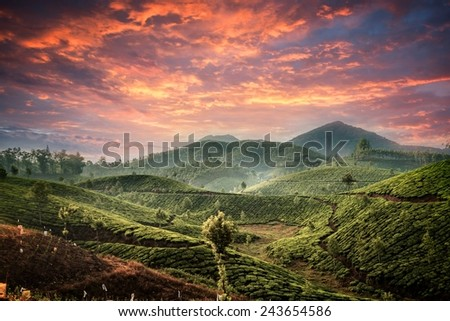 Tea plantations in state Kerala, India - stock photo