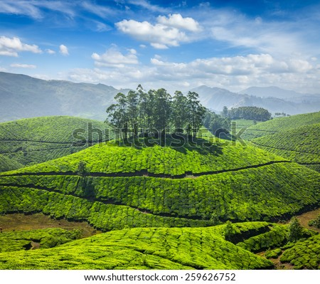 Tea plantations. Munnar, Kerala, India - stock photo