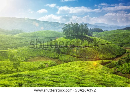 Tea plantations. Munnar, Kerala, India. With lens flare and light leak.