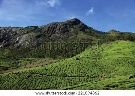 Tea plantations of Munnar. Munnar is a major tourist attraction in Kerala, India. - stock photo
