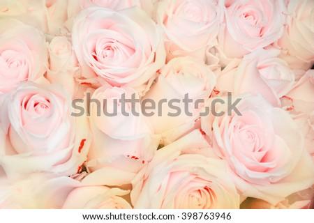 Tea roses background. Toned photo. - stock photo