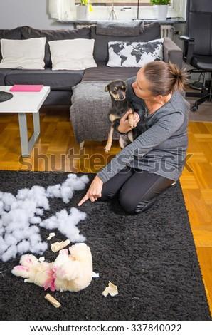 Teaching the puppy dog - stock photo