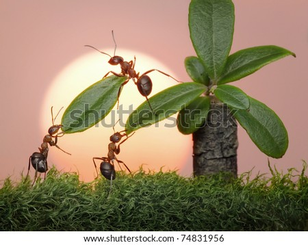 team of ants  cutting leaves of palm on sunset or sunrise, teamwork - stock photo