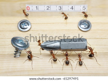 team of ants measures with ruler and carries screwdriver to screw on wood, teamwork - stock photo