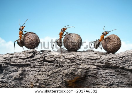 team of ants rolling stones on rock, teamwork - stock photo