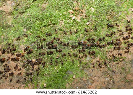 Team of ants with food and egg - stock photo