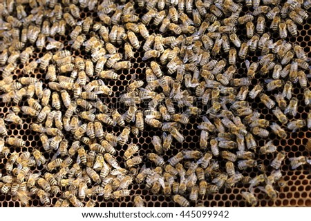 team-working honey bees on a bees wax - stock photo