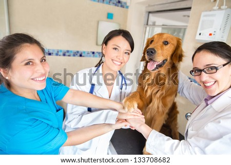 Teamwork at the vet with a group of doctors joining hands with a dog - stock photo