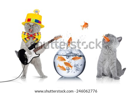 teamwork concept with cats and fish bowl - stock photo