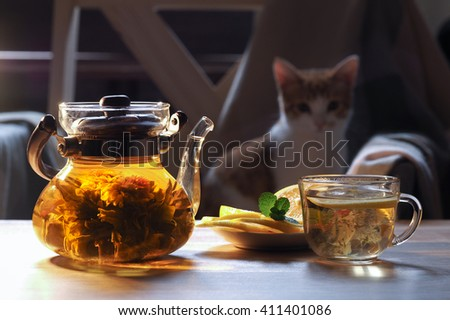 Teapot and glass cup with blooming tea flower inside. In the background the cat - stock photo