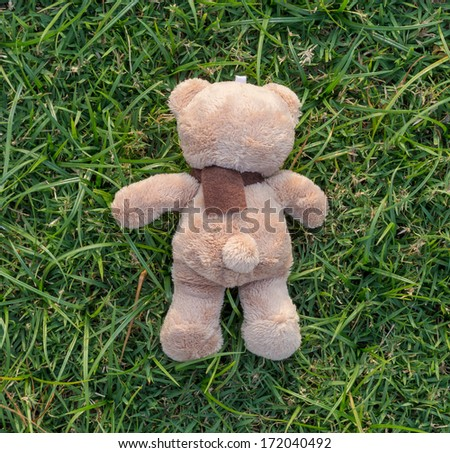 TEDDY BEAR brown color with scarf on the grass,back side - stock photo